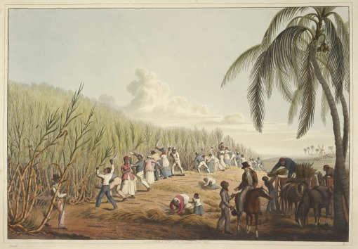 Slaves_cutting_the_sugar_cane_-_Ten_Views_in_the_Island_of_Antigua_(1823),_plate_IV_-_BL